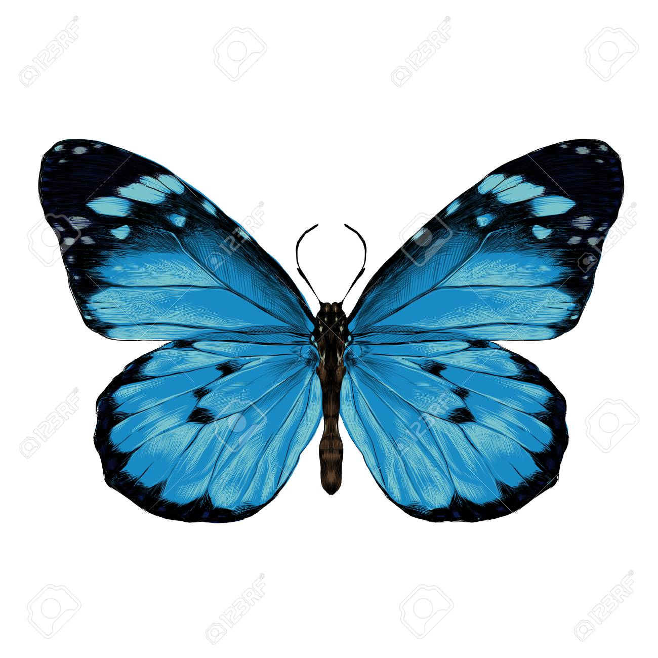 Dibujos Mariposas De Colores. Good Pintar Dibujo Acuarela Mariposa ...