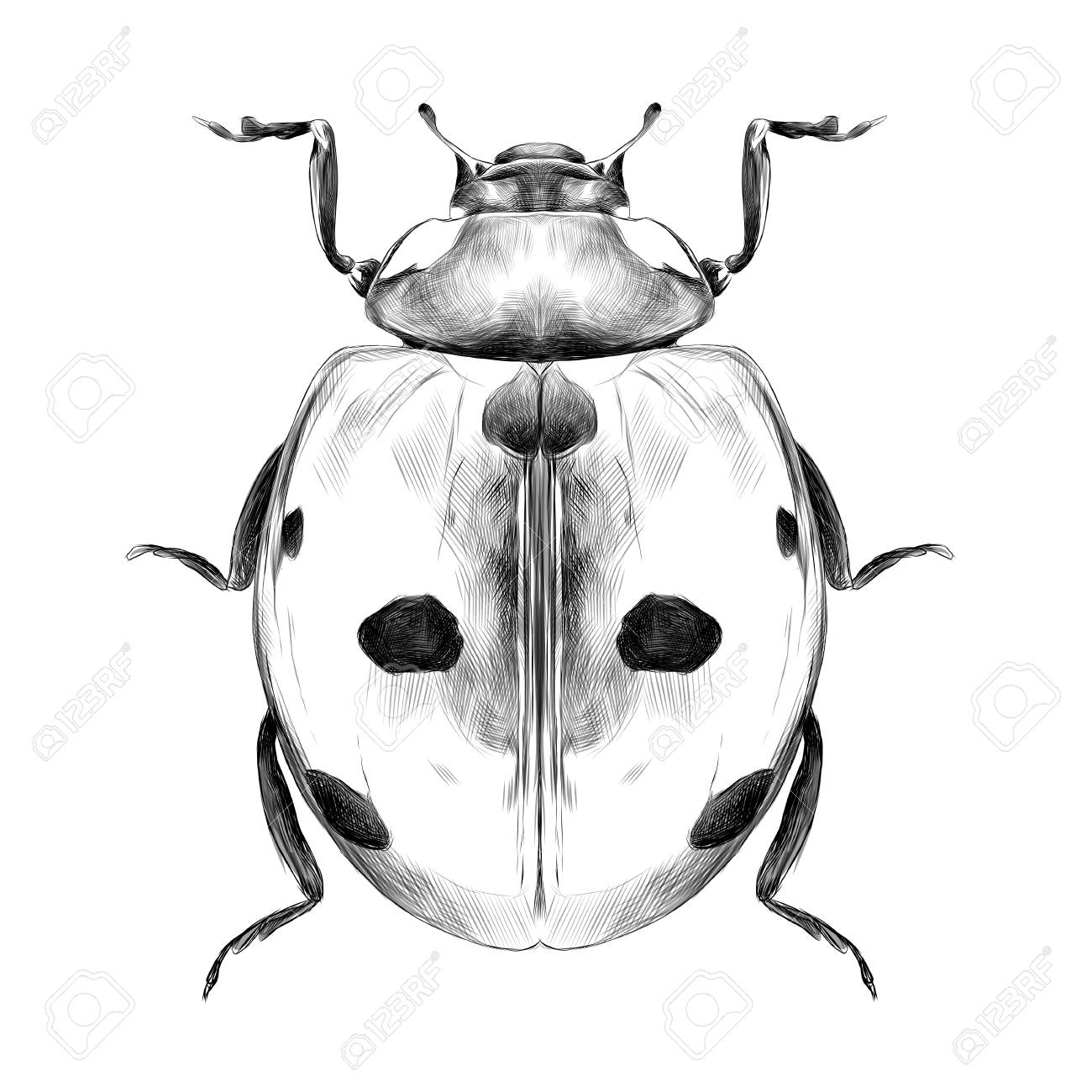 Ladybug Top View Of A Symmetric Graph Sketch Vector Black And