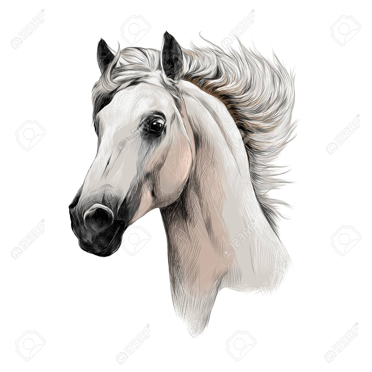 The White Horse Head Profile Sketch Vector Chart Color Picture Stock Photo Picture And Royalty Free Image Image 74392723