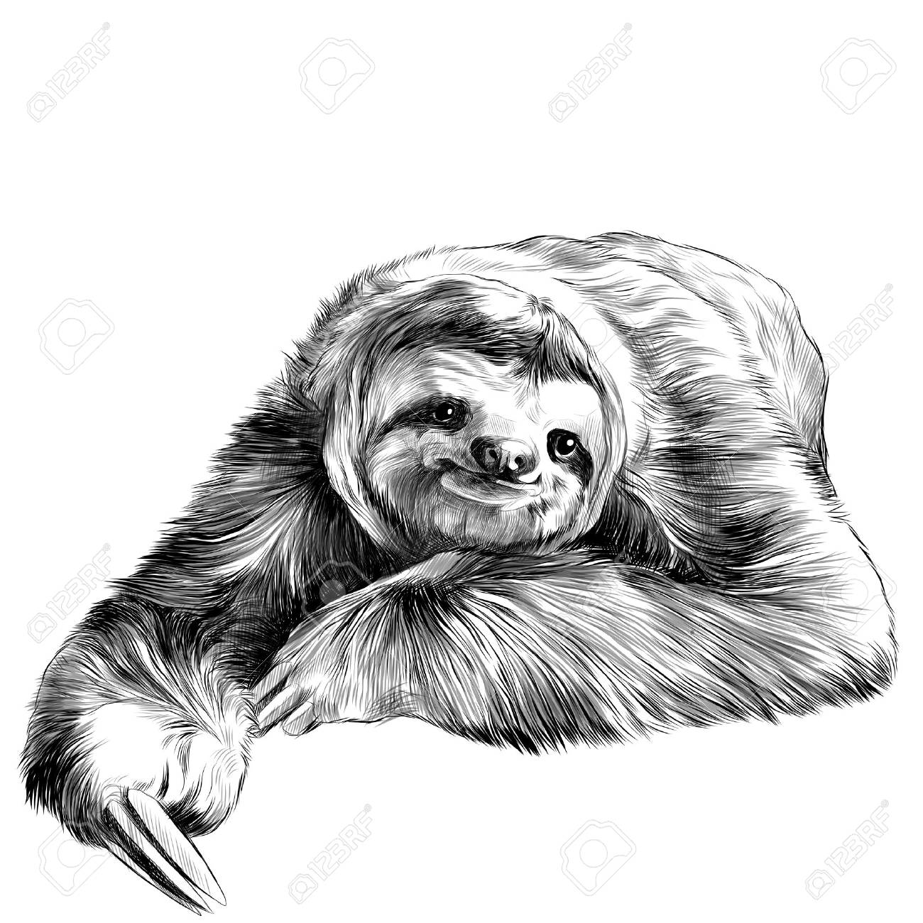 sloth lies with crossed legs, looking right and smiling sweetly, sketch vector graphics black and white drawing - 76041671