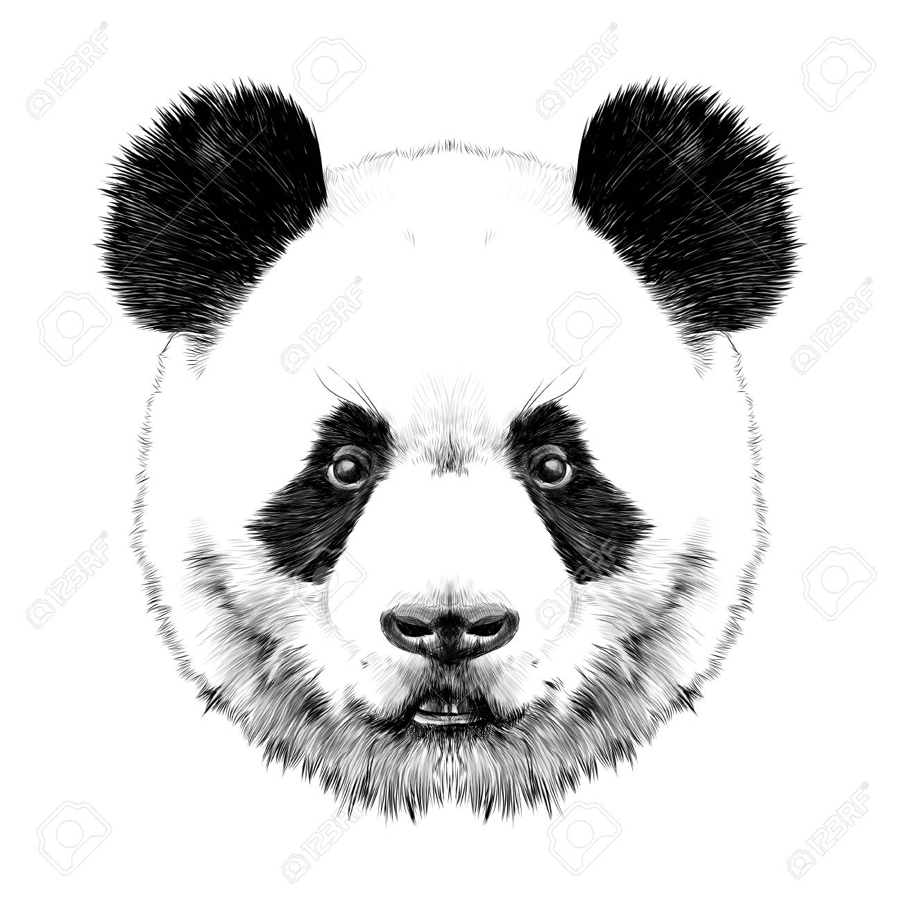 Panda Head Is Symmetrical Looks Right Sketch Vector Graphics