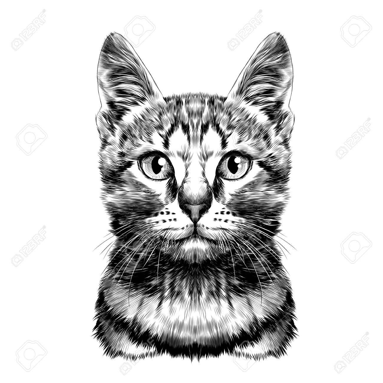 猫発見ストライプ ヘッド対称スケッチ ベクトル グラフィック白黒図面のイラスト素材 ベクタ Image