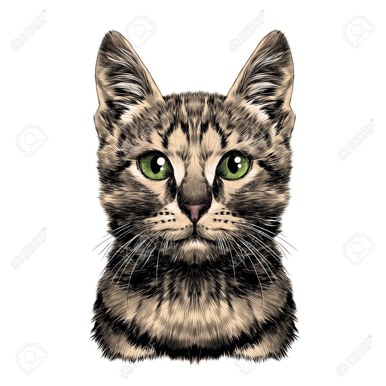 Gato Manchado Rayado Cabeza Simétrica Dibujo Vector Gráficos Color