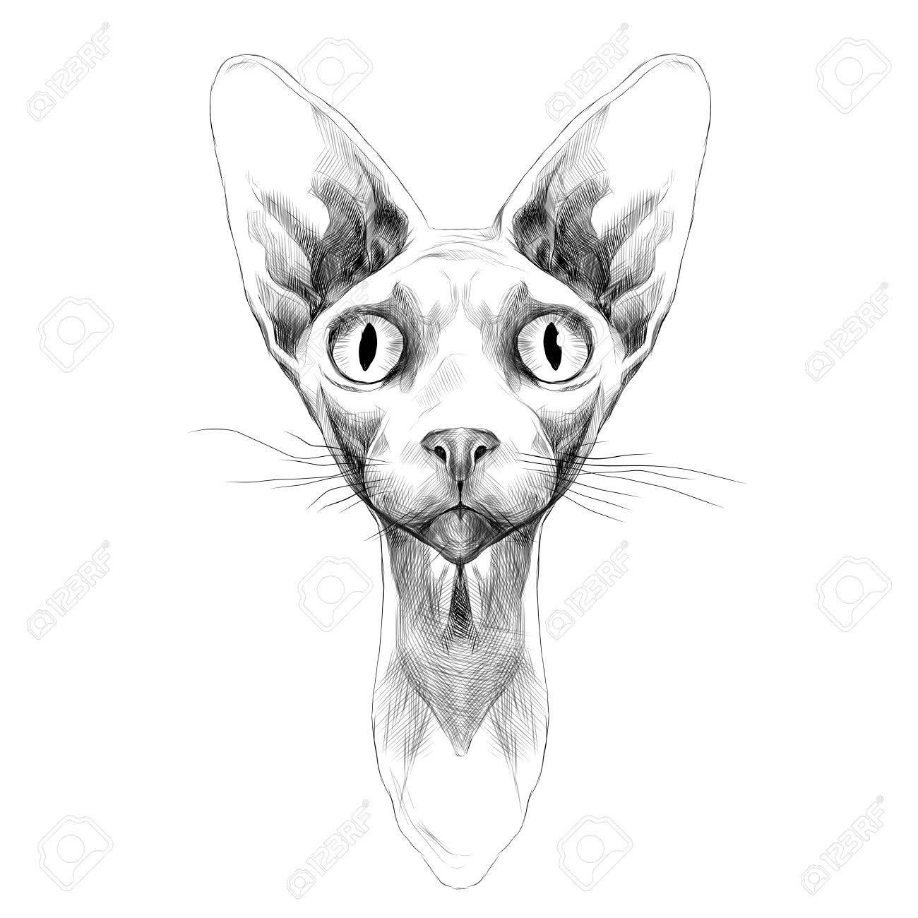 Vettoriale Il Gatto Di Razza La Testa Della Sfinge è Disegno In