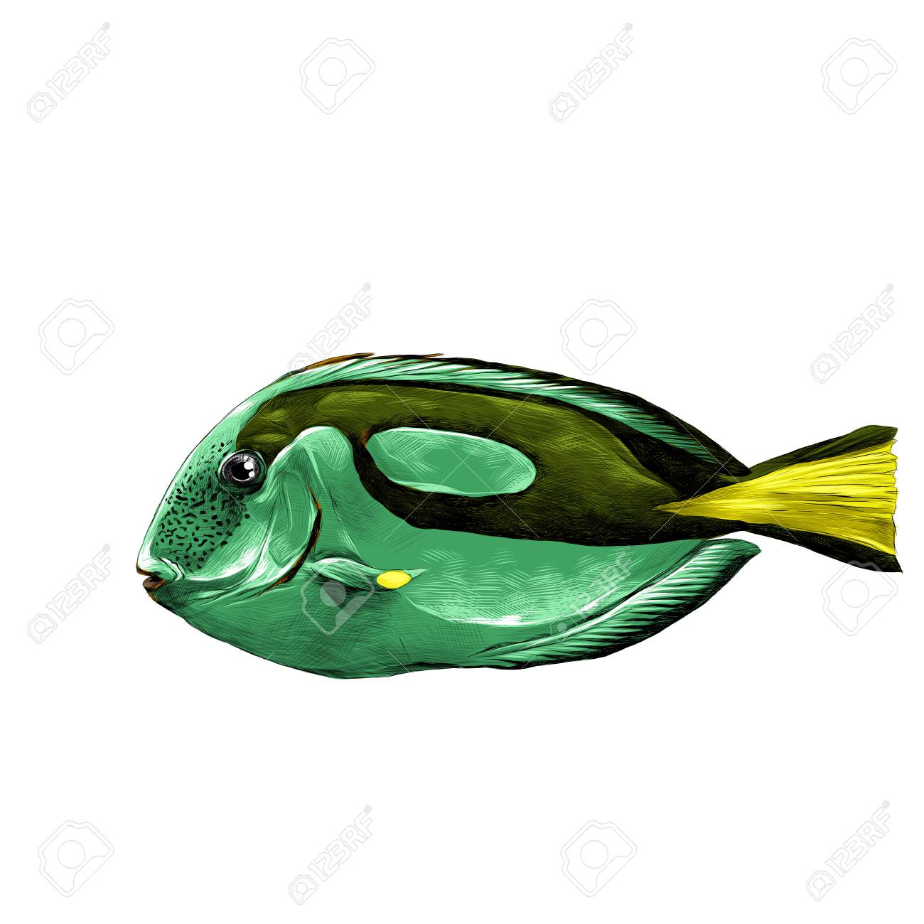 Fish Acanthur Green Sketch Vector Graphics Color Picture Royalty ...