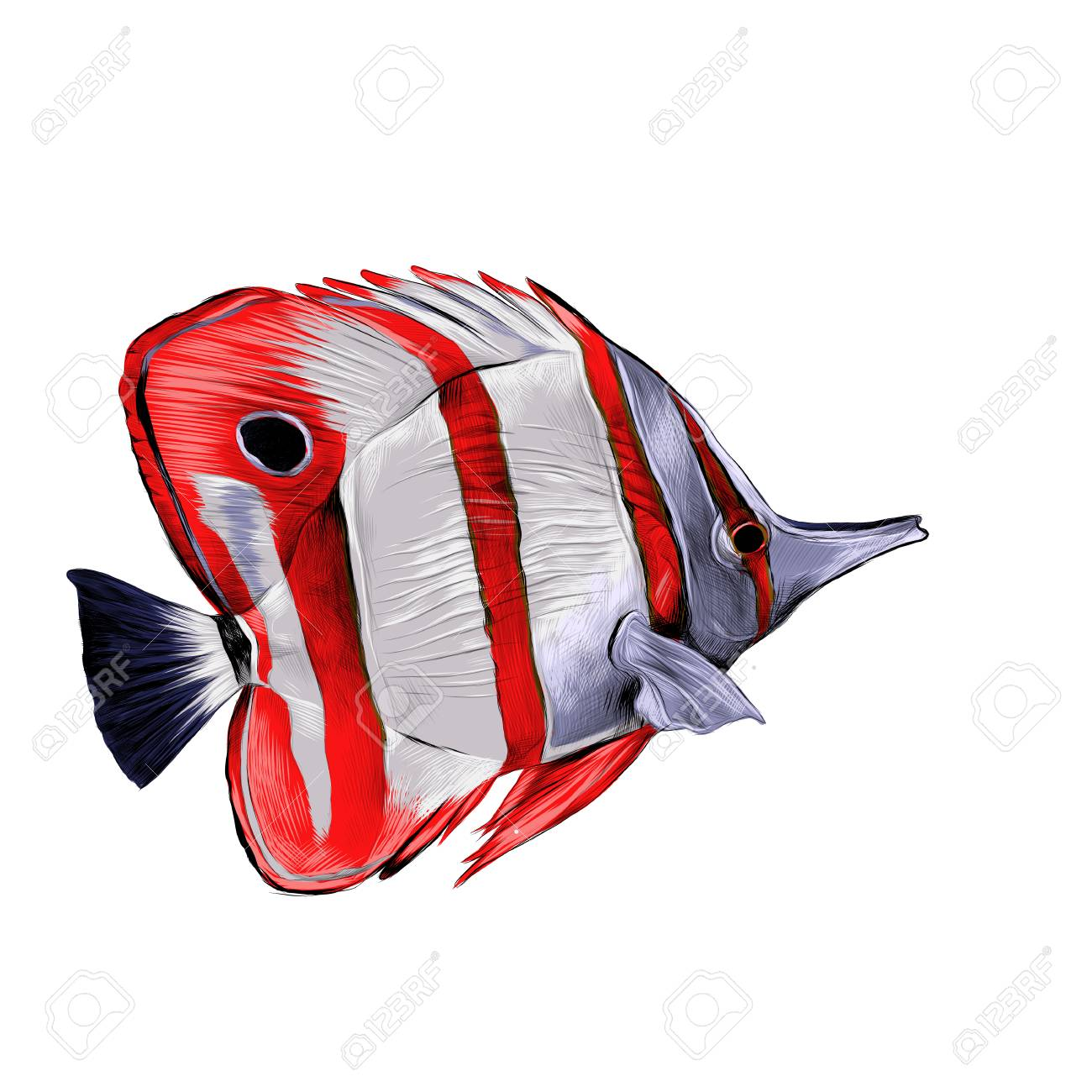 Fish Acanthur With Red Stripes Sketch Vector Graphics Color Picture ...