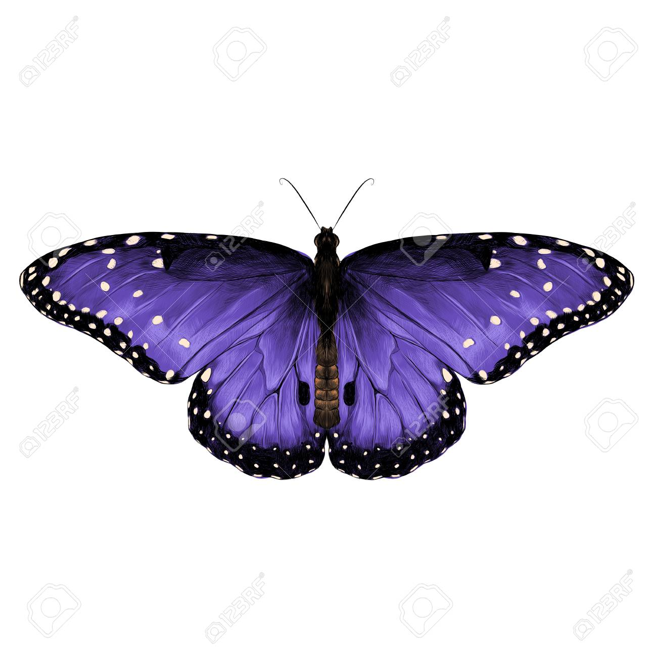 butterfly top view of symmetrical purple-stained , sketch vector.. royalty  free cliparts, vectors, and stock illustration. image 79176952.  123rf