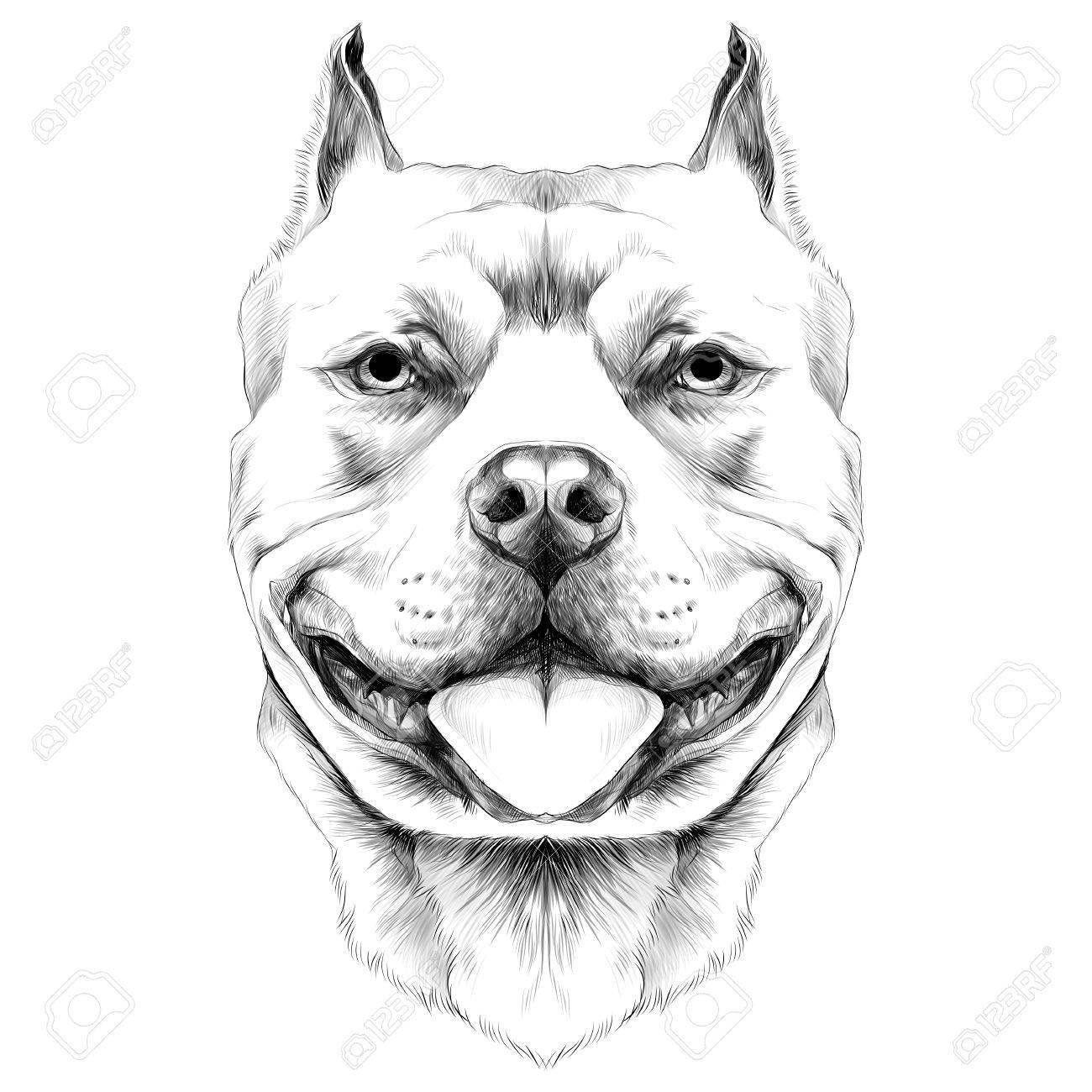 Chien Engendre Le Pit Bull Américain Bull Terrier Croquis Vecteur Graphique Dessin Noir Et Blanc