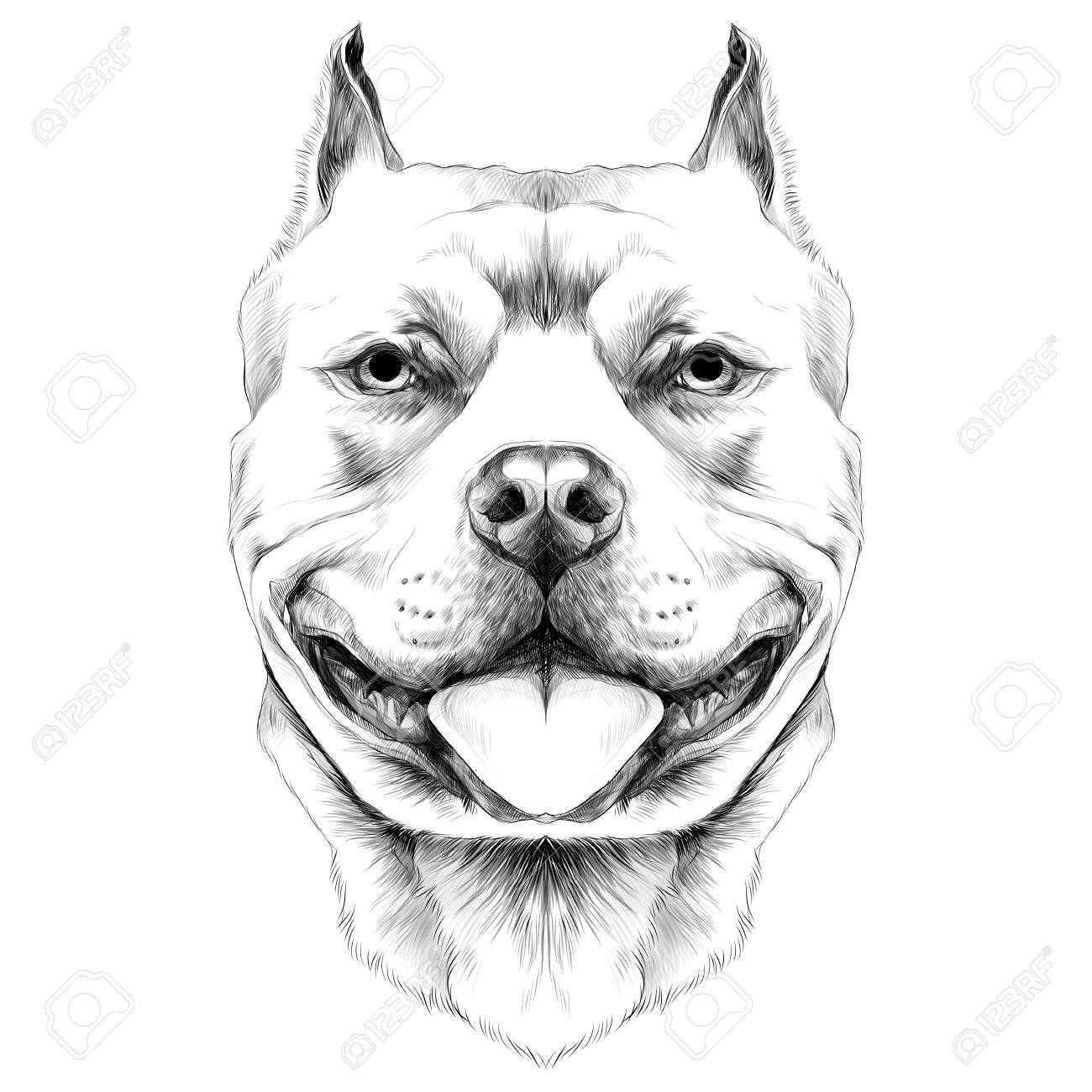 Perro Razas Americano Pitbull Terrier Cabeza Boceto Vector