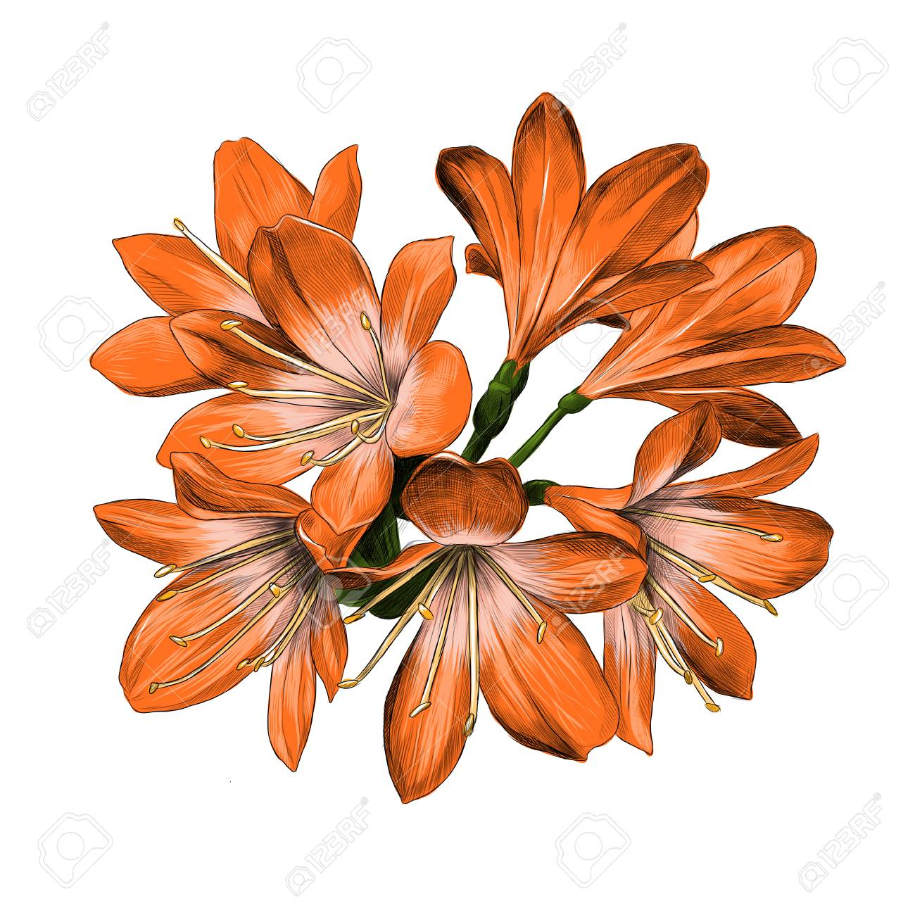 Lily Bouquet 7 Flowers Orange Color Sketch Vector Graphics Color ...
