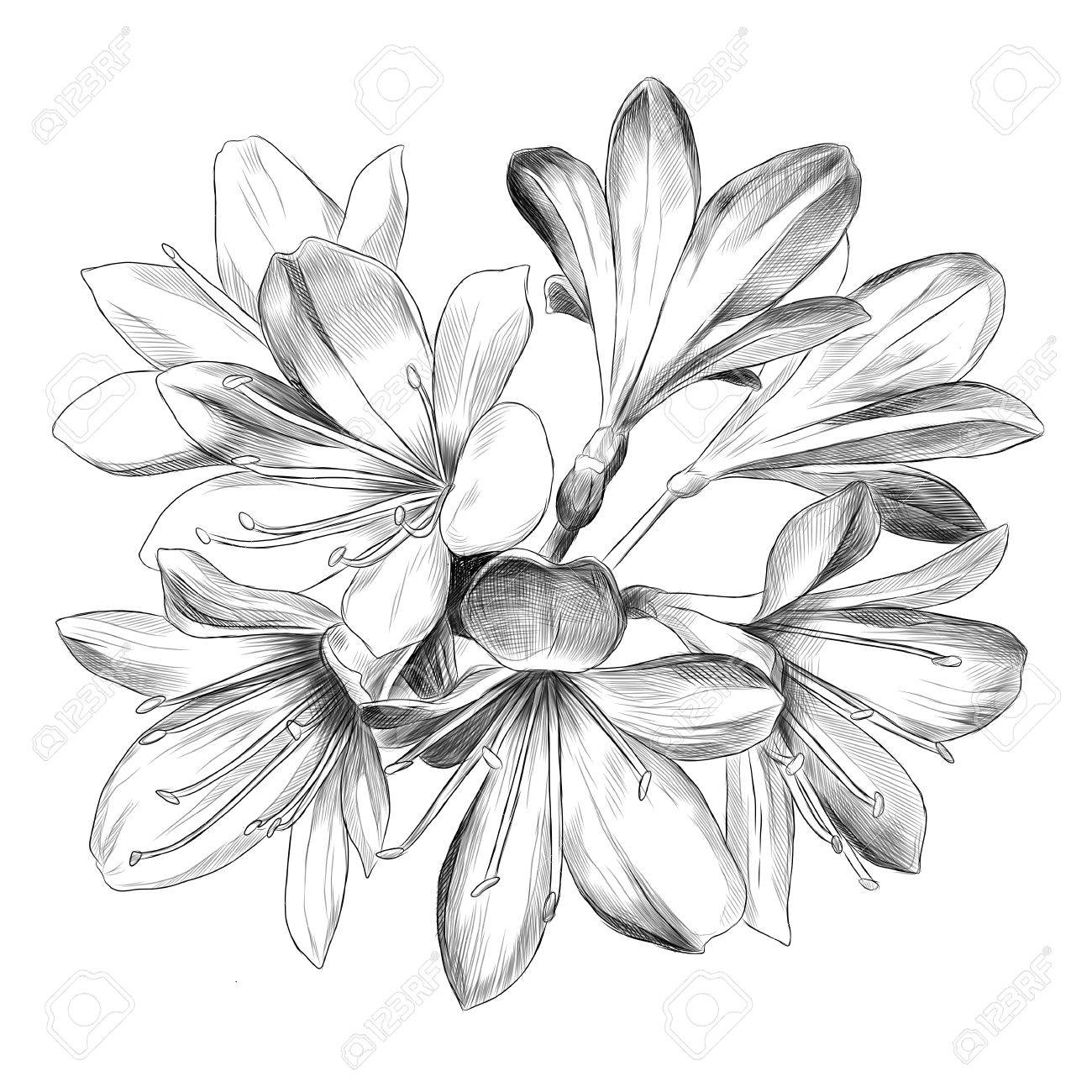 Lily bouquet 7 flowers sketch vector graphics black and white lily bouquet 7 flowers sketch vector graphics black and white drawing stock vector 80714737 mightylinksfo