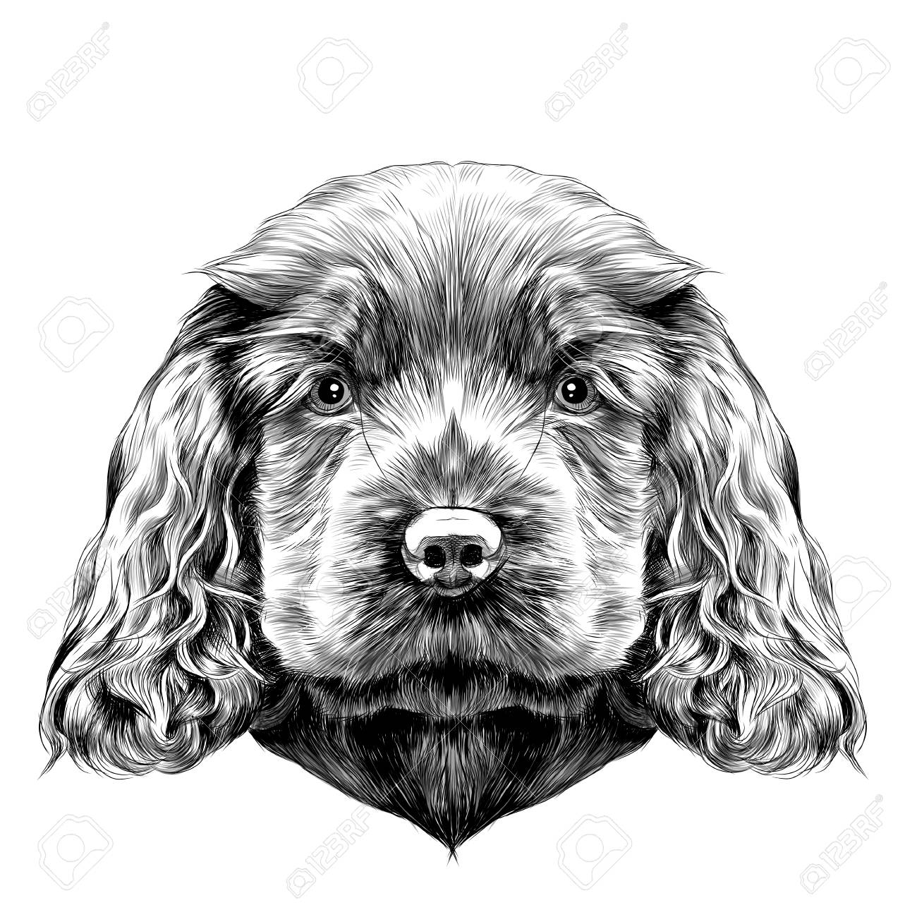 Dog Breed Cocker Spaniel Puppy Sketch Vector Graphics Black Royalty Free Cliparts Vectors And Stock Illustration Image 80724412