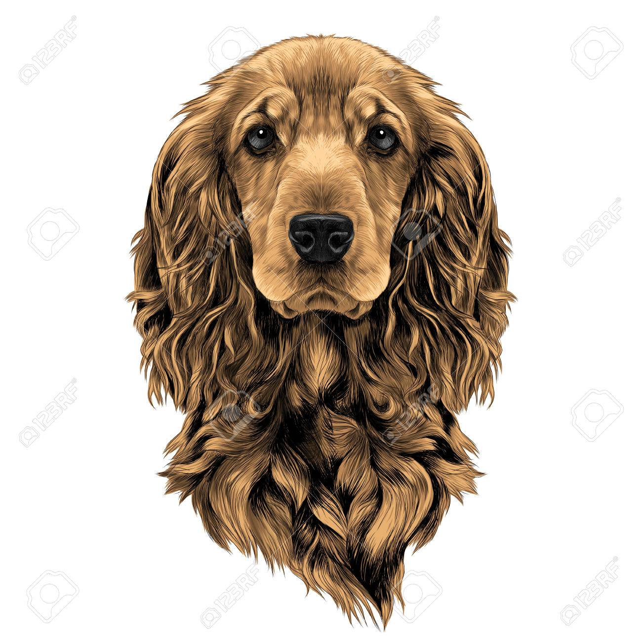 Dog Breed Cocker Spaniel Muzzle Sketch Vector Graphics Color Royalty Free Cliparts Vectors And Stock Illustration Image 80719279