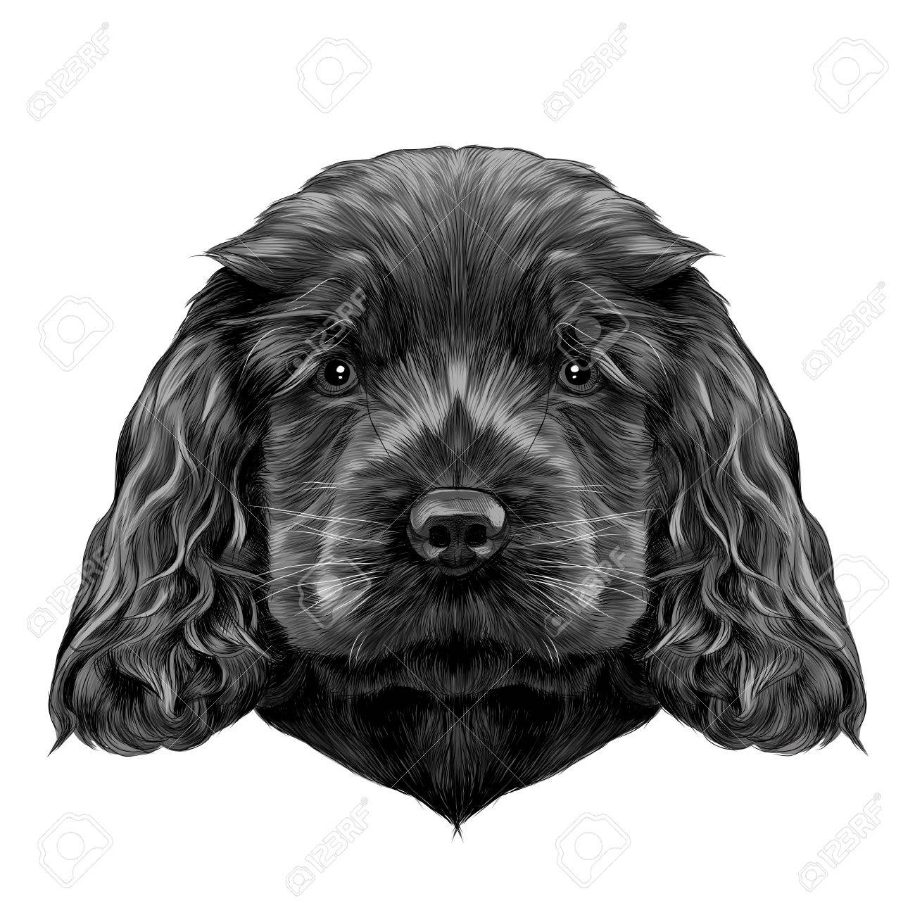 Dog Breed Cocker Spaniel Puppy Sketch Vector Graphics Color Royalty Free Cliparts Vectors And Stock Illustration Image 80718935