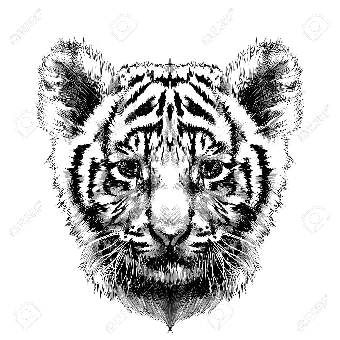 Tigre Cub Tête Croquis Vectoriels Dessin Noir Et Blanc Clip Art