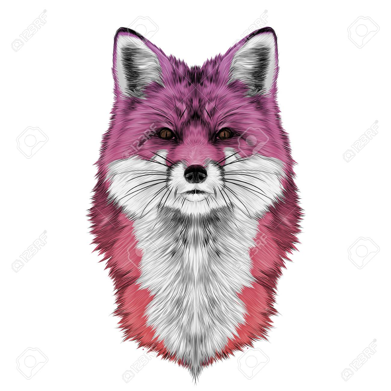 fox head front looking directly sketch vector graphics colored