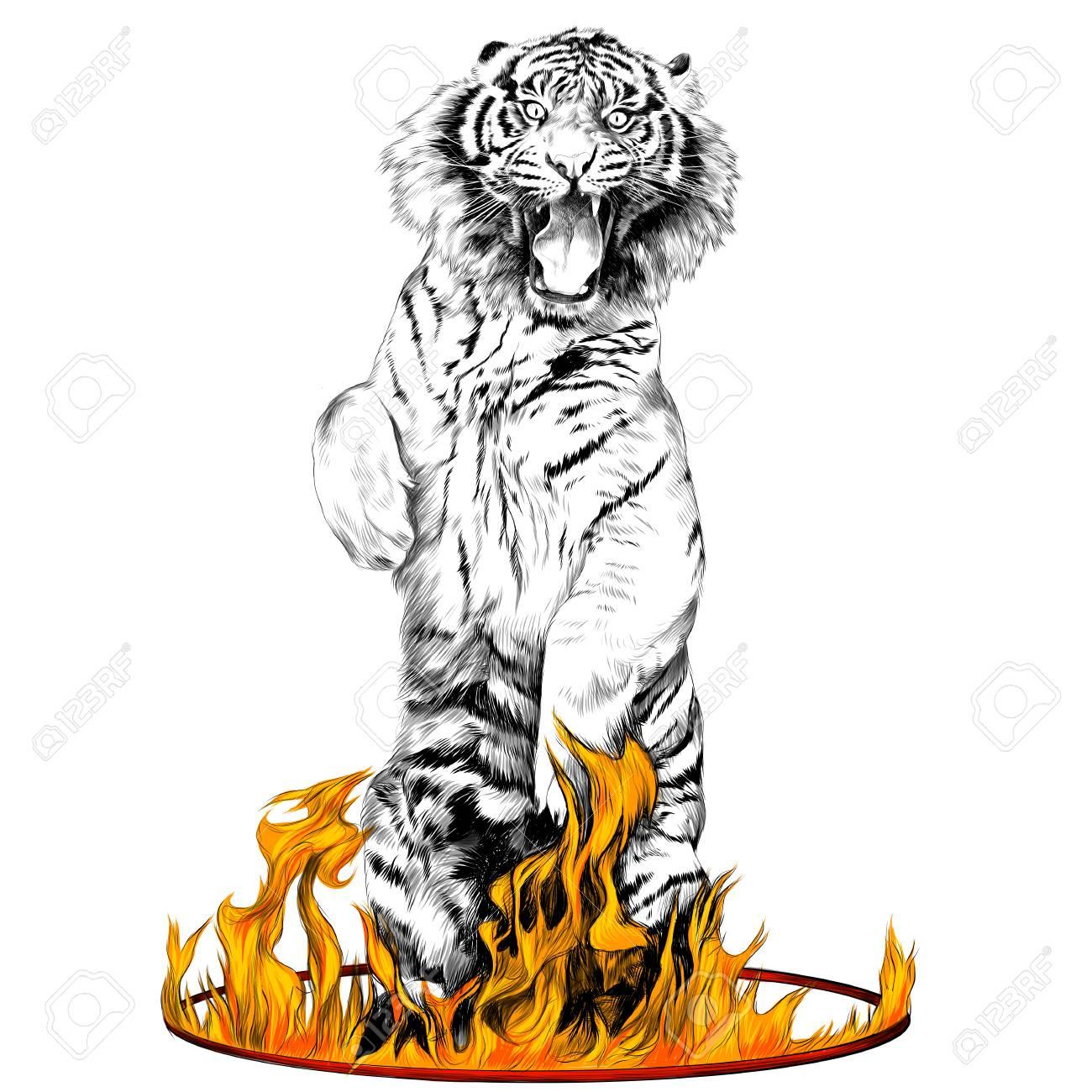 Tiger Pleine Est Sur Ses Pattes Longues Dans Un Anneau De Dessin Vectoriel De Dessin Animé De Film Dessin Animé Et Noir Et Blanc Flamme