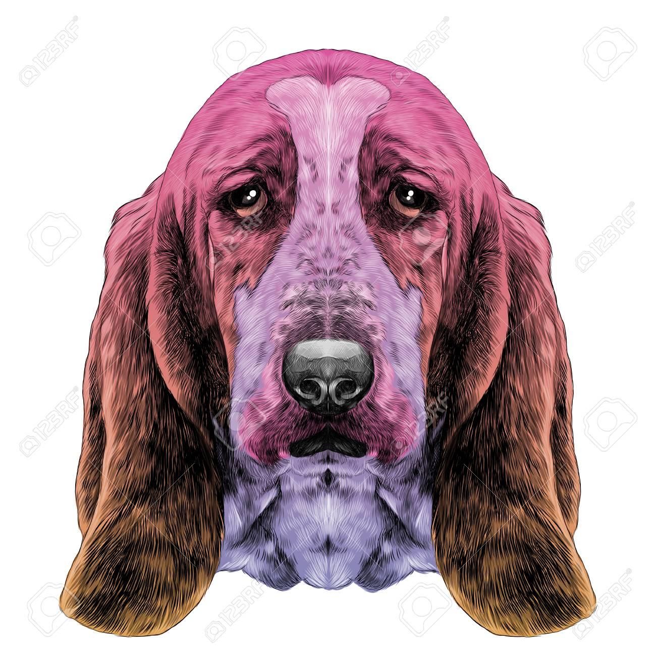 La Cabeza Del Perro Raza Basset Hound Con Orejas Largas Boceto Gráficos Vectoriales Gradiente De Dibujo Coloreado De Diferentes Colores