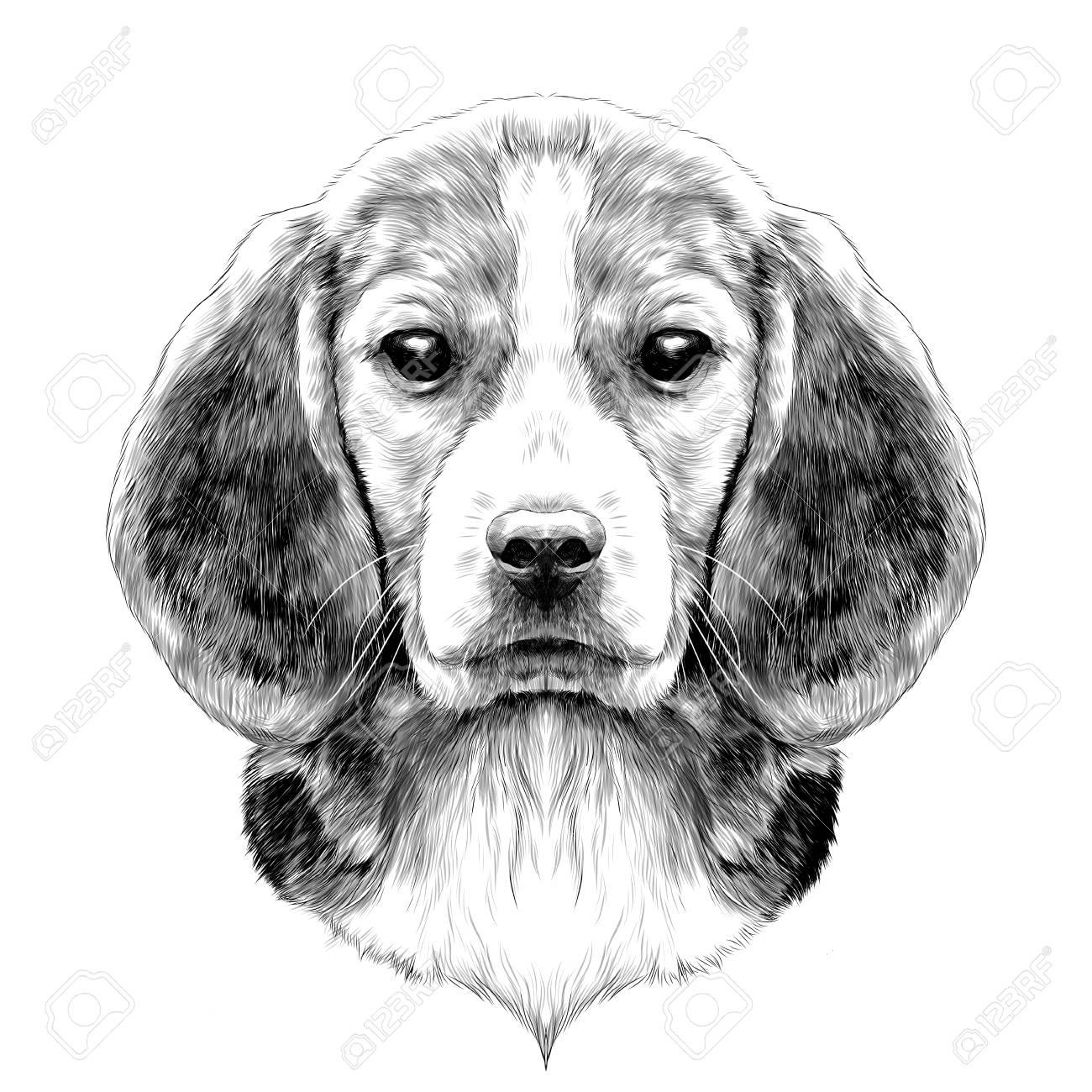 Race De Tête De Chien Beagle Croquis Graphiques Vectoriels Dessin Noir Et Blanc