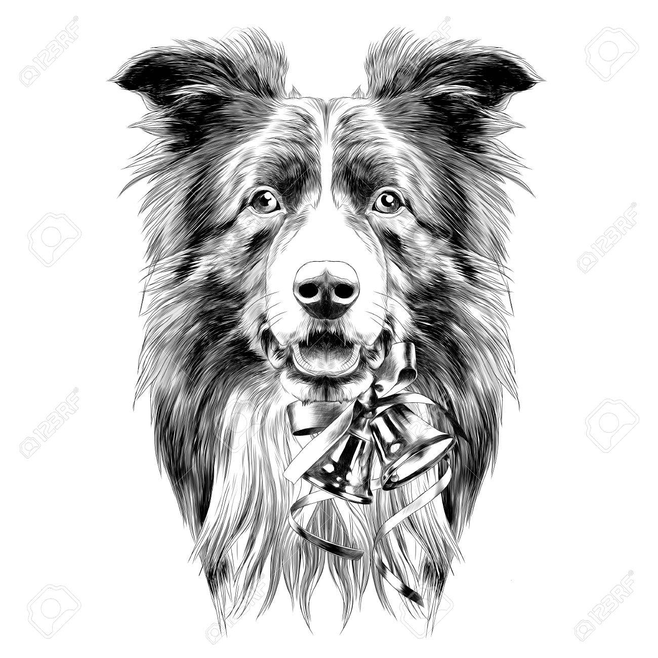 Dog Head Breed Border Collie Sketch Vector Graphics Color Drawing
