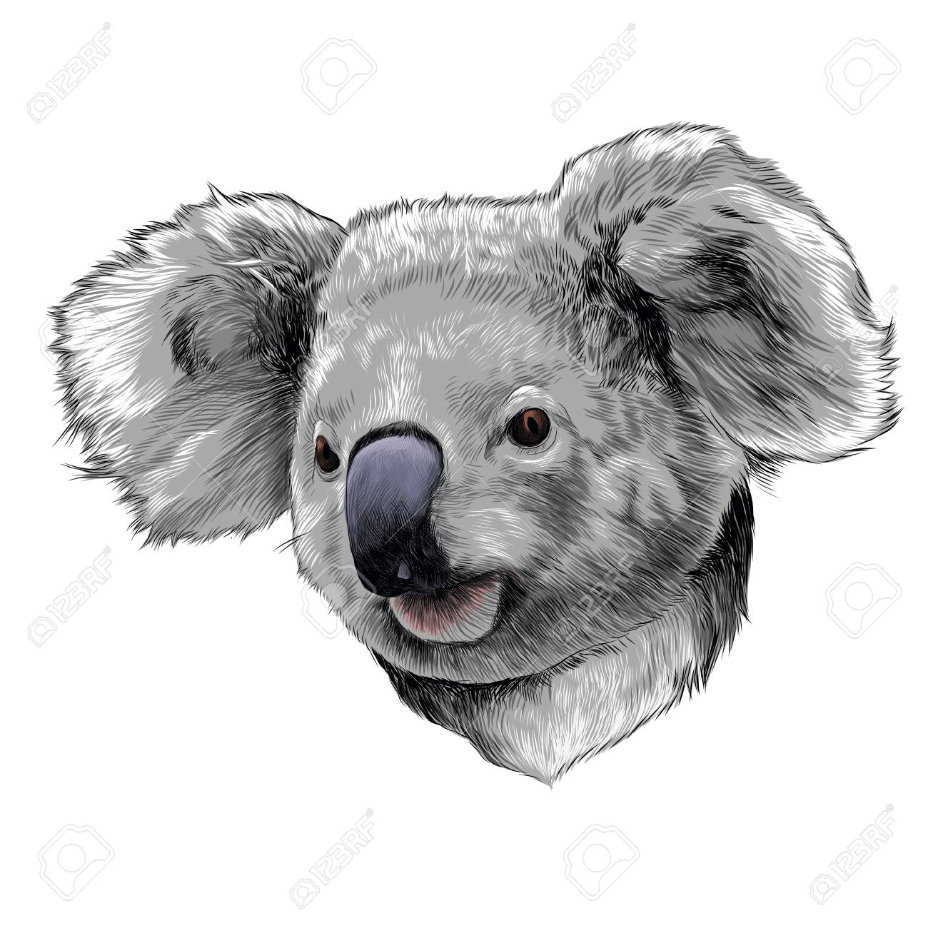 koala head colored drawing sketch graphic illustration royalty free