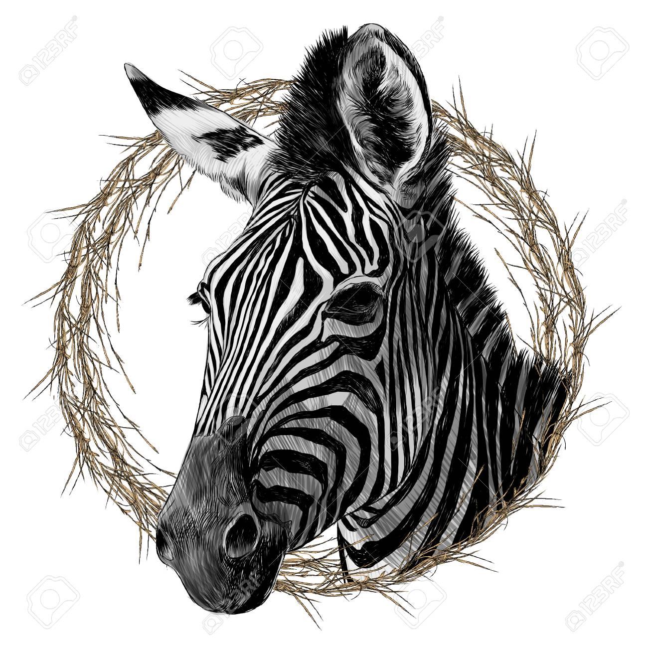 Zebra Head Framed Sketch Graphic Design. Royalty Free Cliparts ...