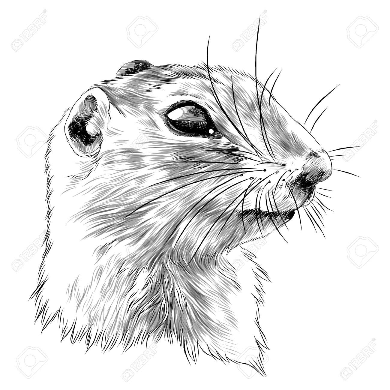 Gopher sketch graphic design. - 91604262