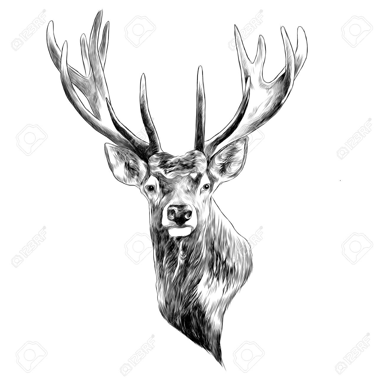 Stag deer head sketch graphic design. - 91604384