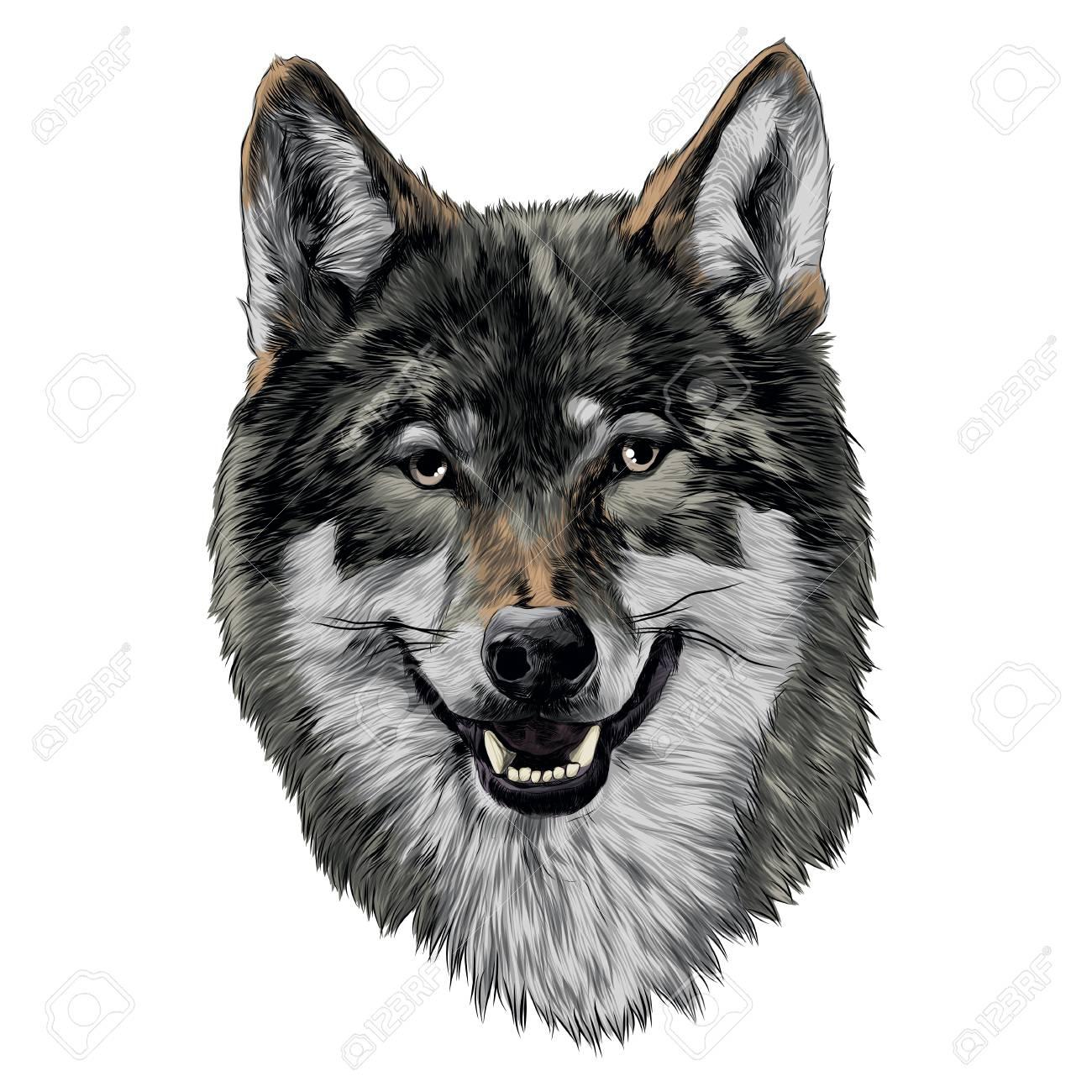 Gráfico De Cabeza De Vector De Dibujo De Cabeza De Lobo
