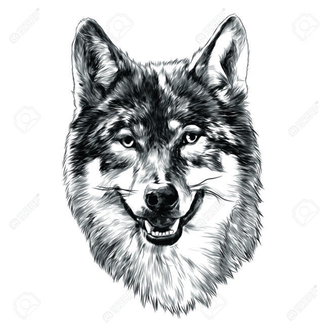 オオカミの頭はグラフィック デザインをスケッチします