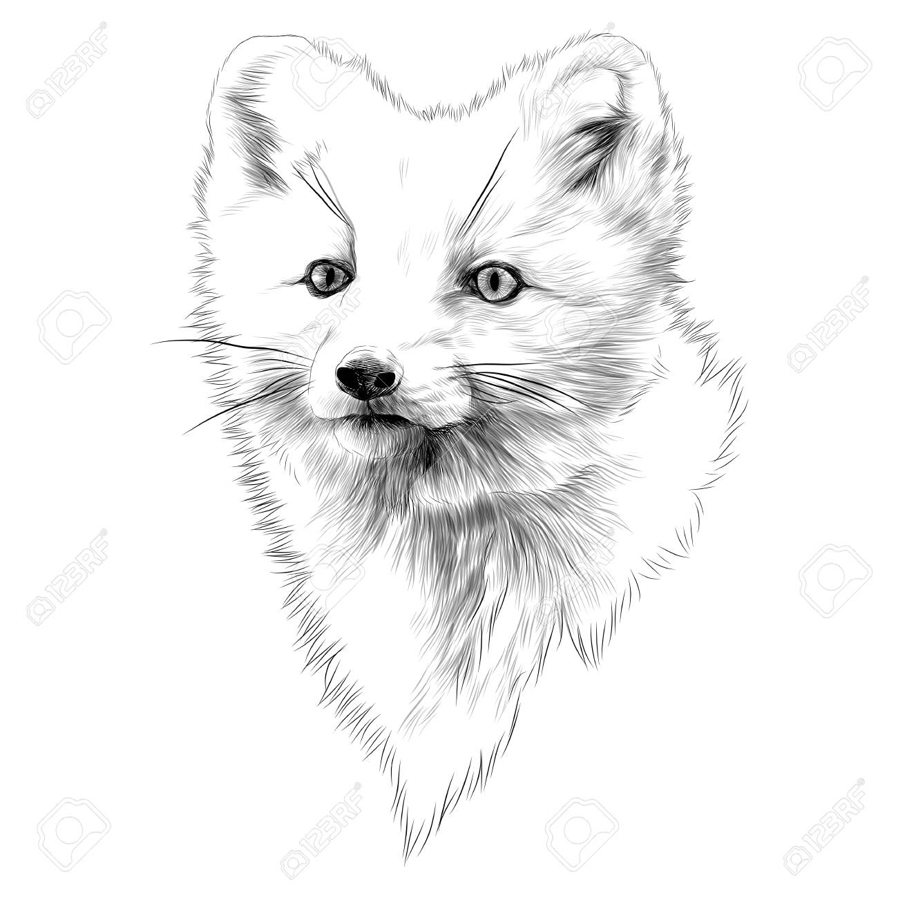 Arctic fox head sketch graphic design stock vector 91604705