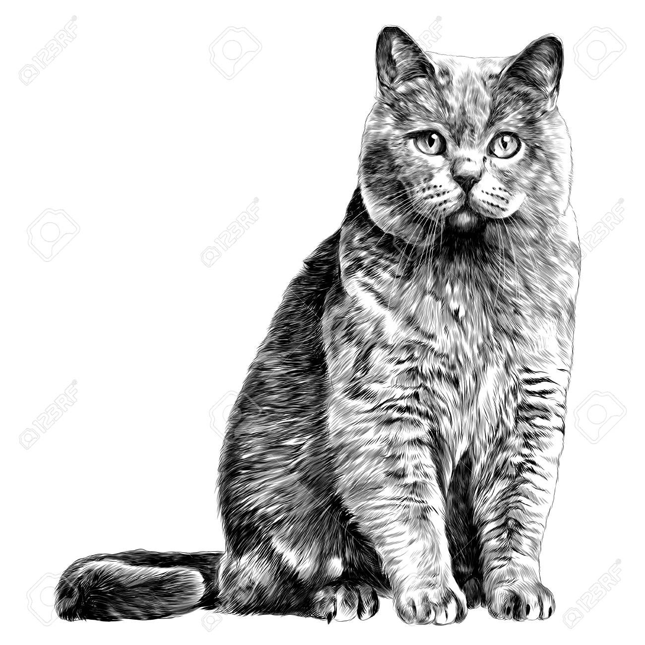 cat sketch vector graphics monochrome black,and,white drawing