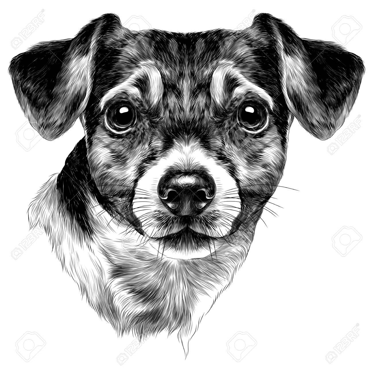jack russell terrier bleistiftzeichnung schwarz weiß