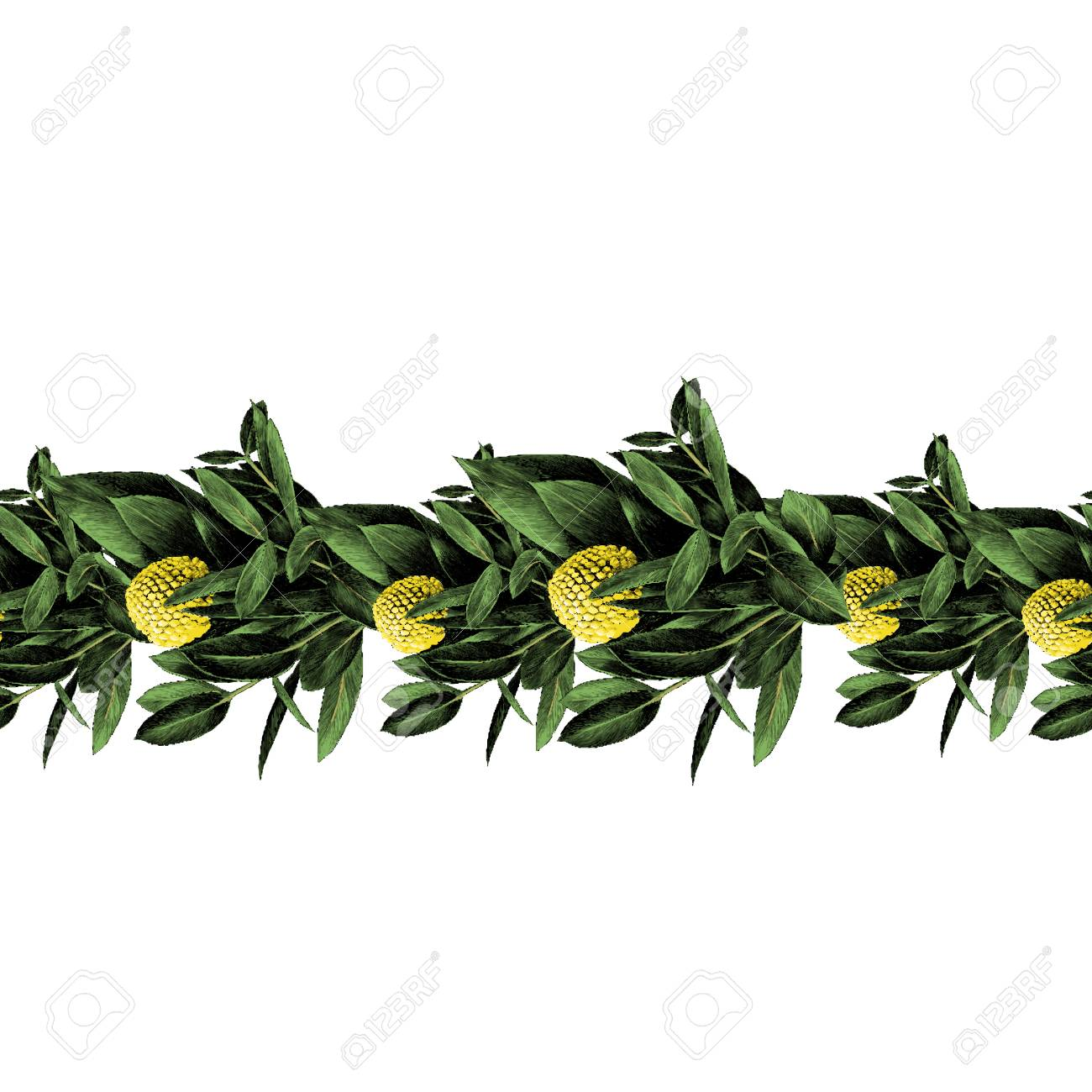 Strip Of Branches With Green Leaves And Round Yellow Flower