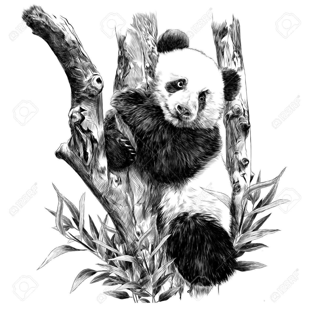 Panda rests on a branch hugging the sheets of sketch vector graphics monochrome black-and-white picture - 96185949