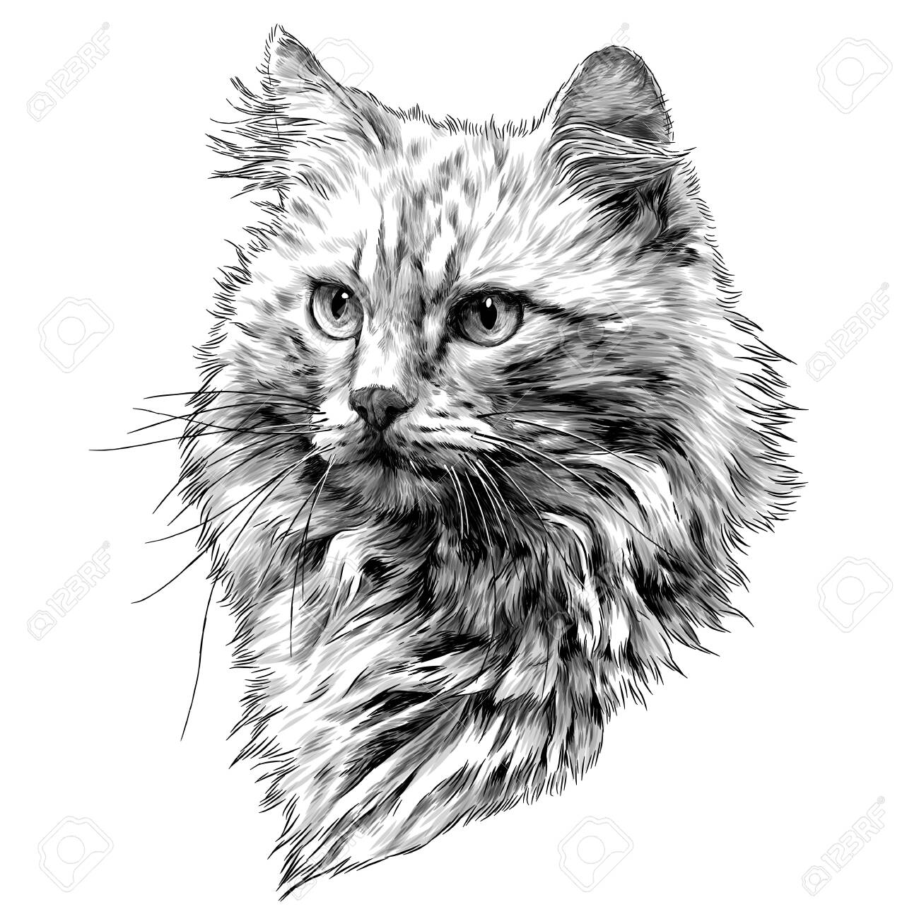 red cat muzzle with thick hair, sketch vector graphics monochrome illustration on a white background - 139493460