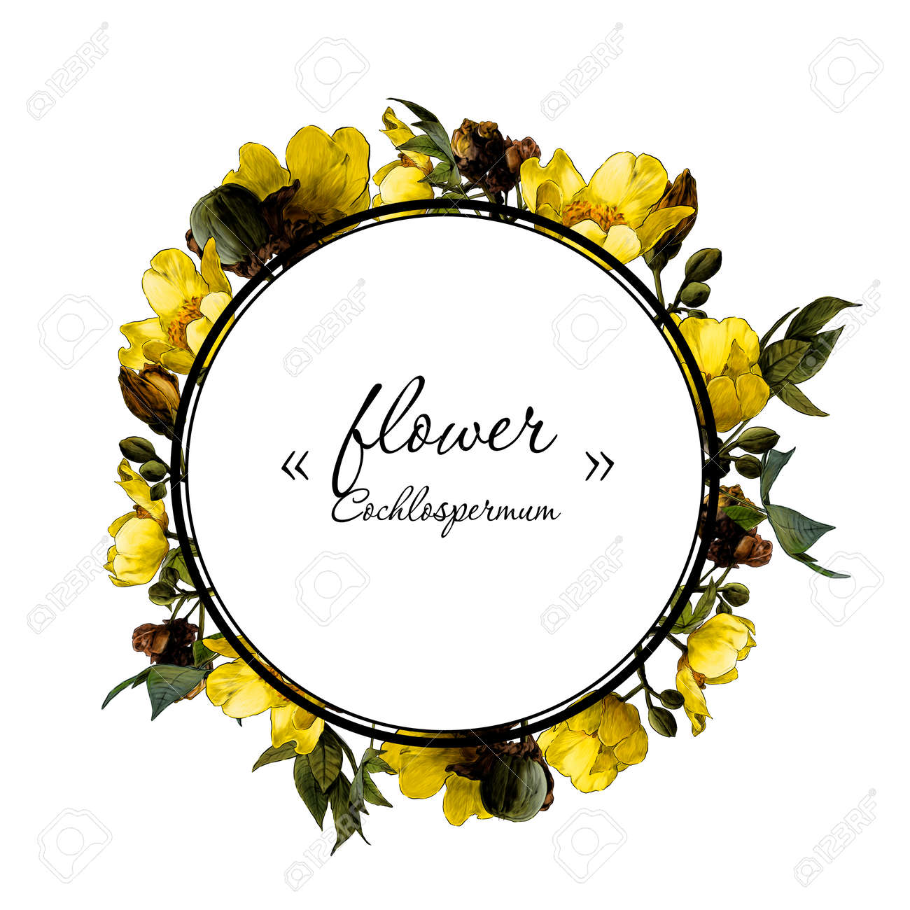 round frame decorated with branches of a flowering cochlospermum tree with yellow flower buds and leaves, sketch vector graphics color drawing in lines on a white background - 162318524