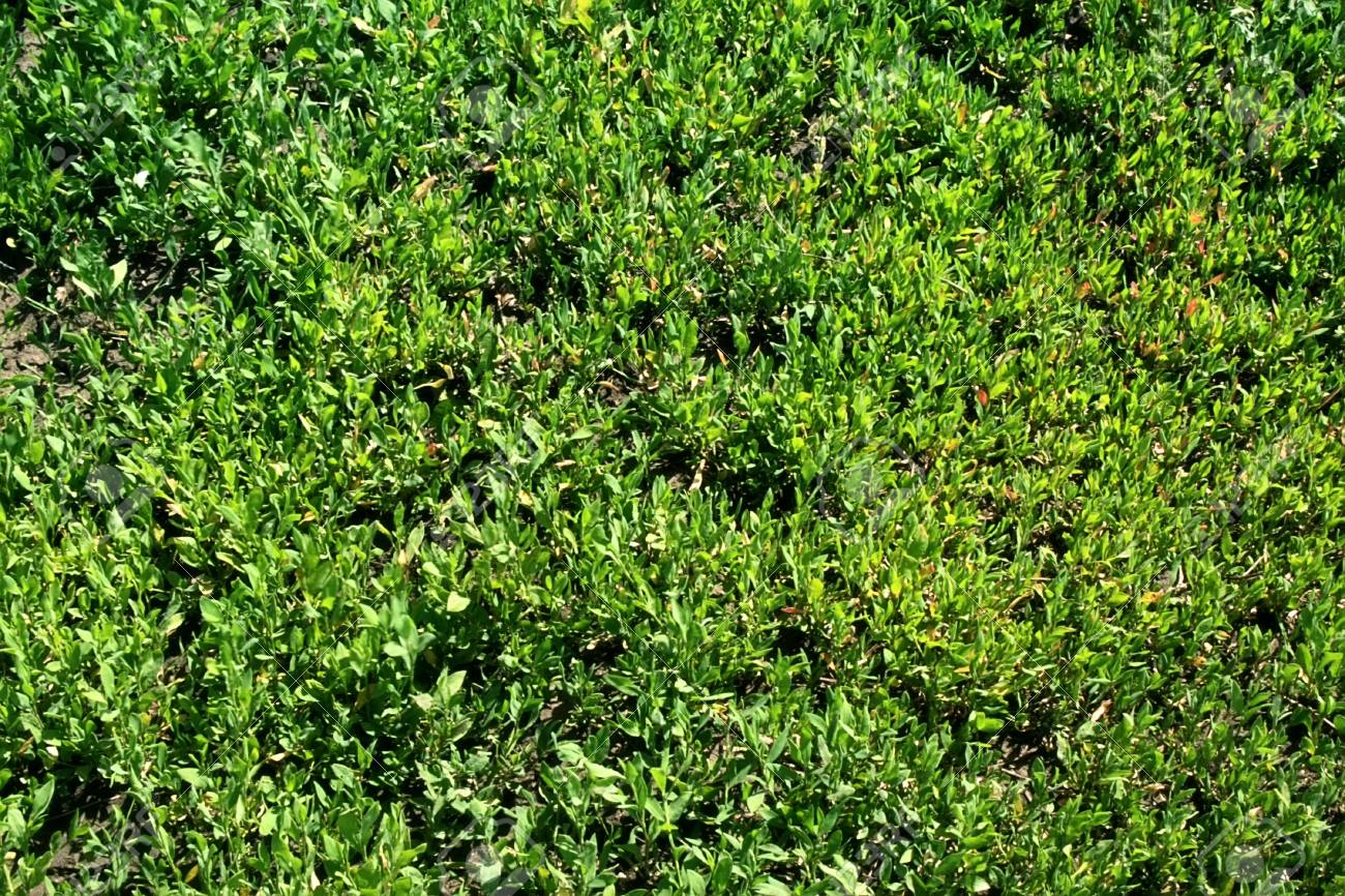 green lush grass on a summer meadow Stock Photo - 7466560