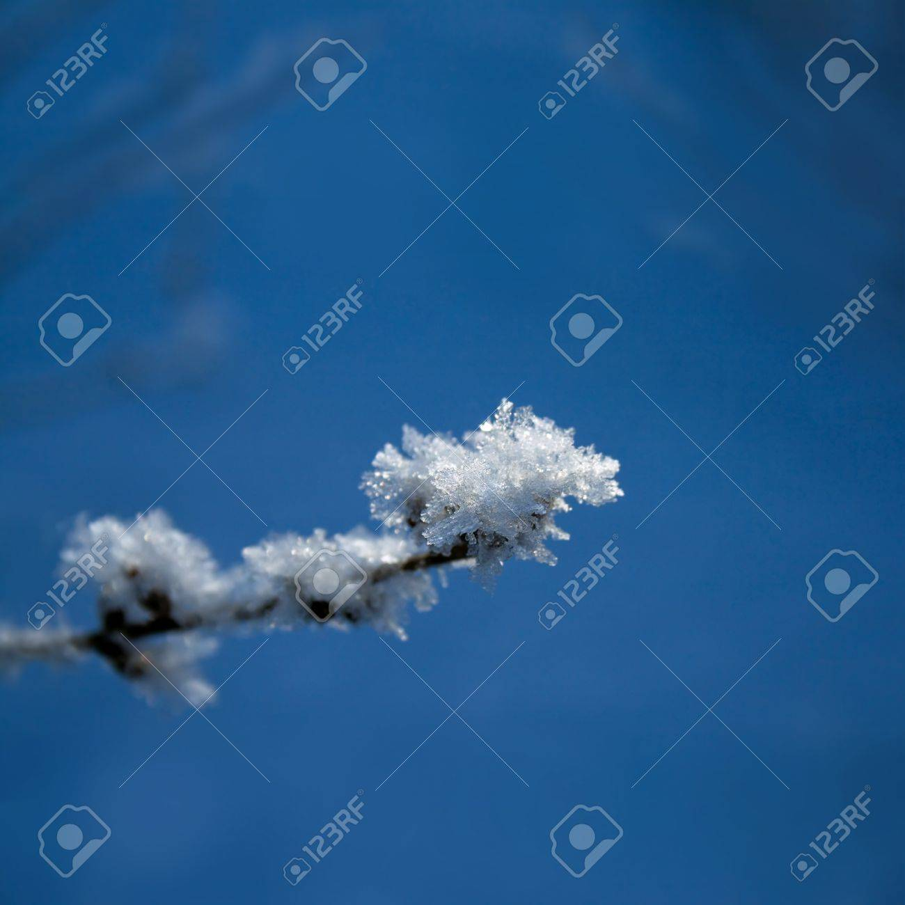 Branch covered with hoarfrost close up Stock Photo - 21470017