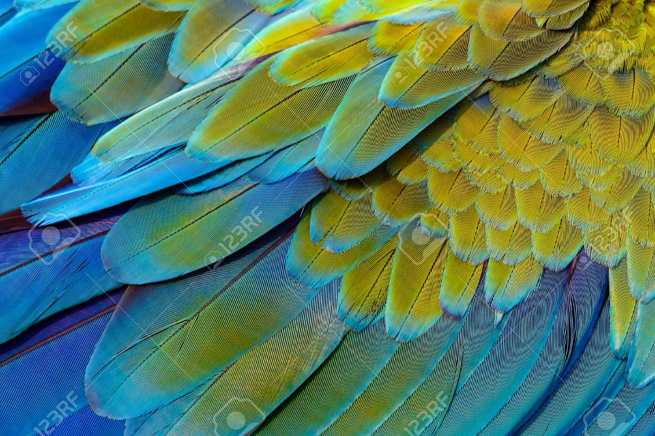 Close up of catalina macaw bird's feathers, exotic nature background and texture. - 122263879