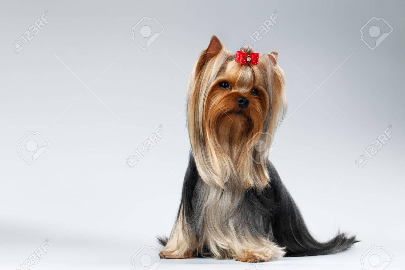 Charmant Haar Terrier Mix Rasse Fotos - Die Besten Elektrischen ...
