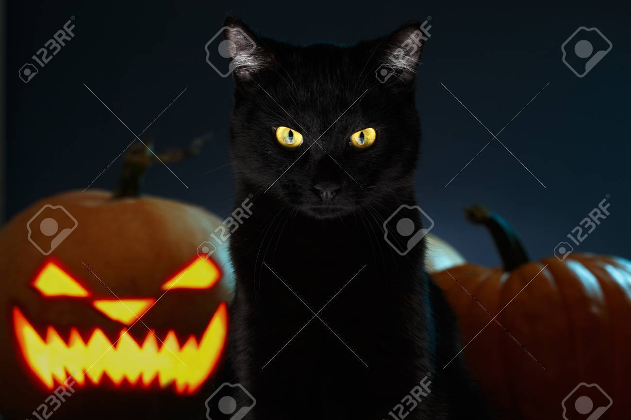 Portrait Of Black Cat With Halloween Pumpkin On Background And Scary Spooky  Eyes, Creepy Horror