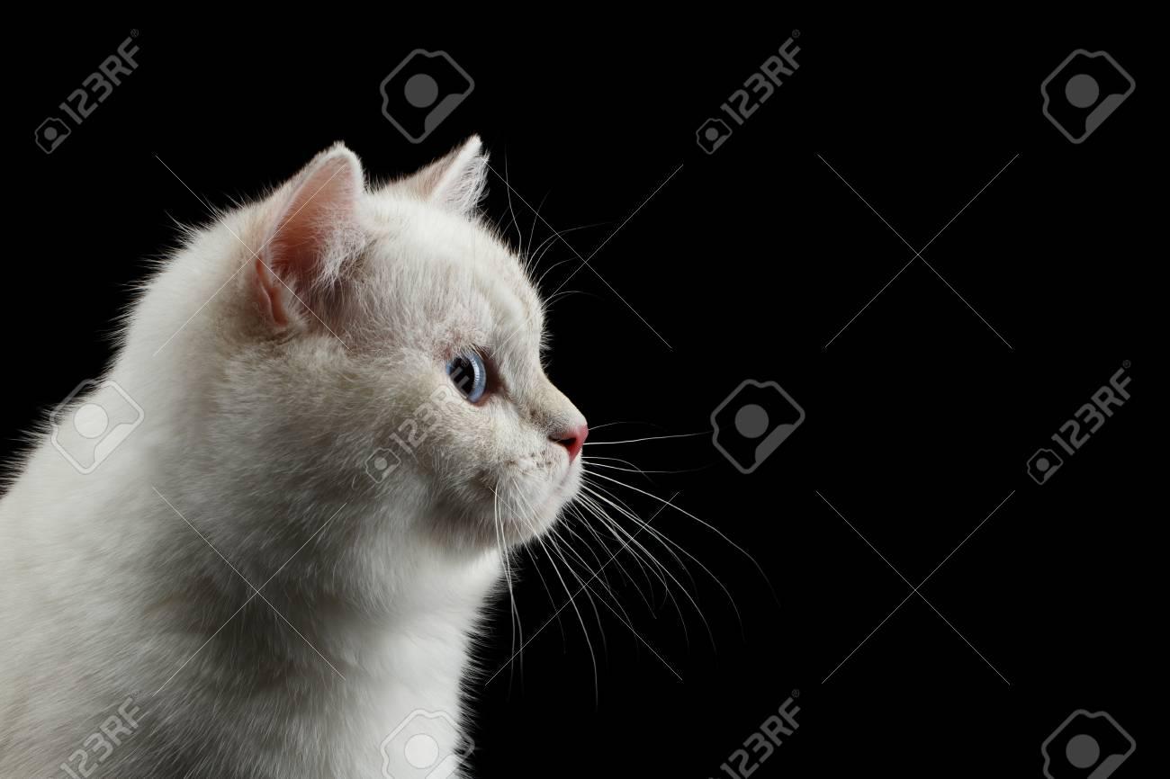 gros noir chatte trous