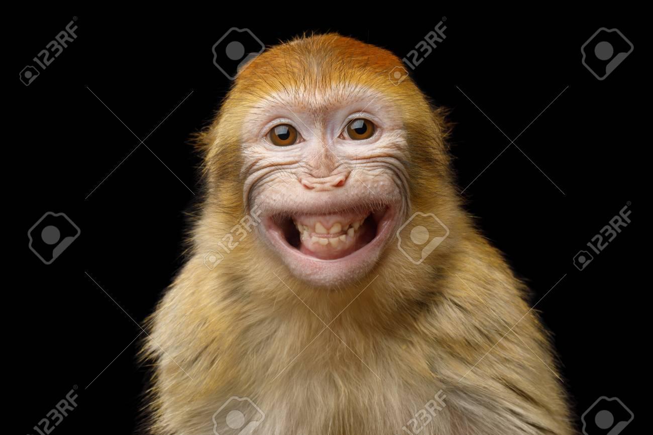 Portrait Drole De Sourire Singe Macaque De Barbarie Montrant Des Dents Isolees Sur Fond Noir Banque D Images Et Photos Libres De Droits Image 83037740
