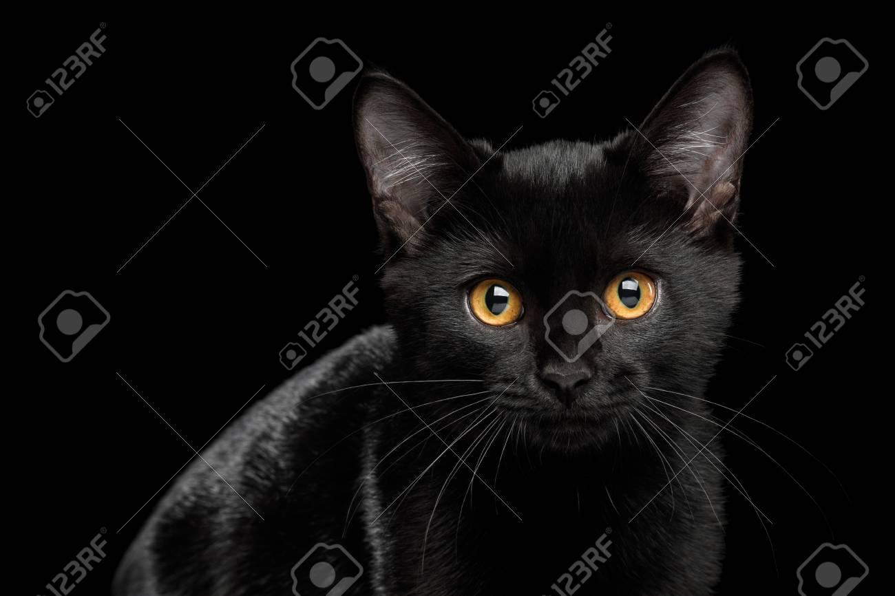 zeer zwart poesje Fotos