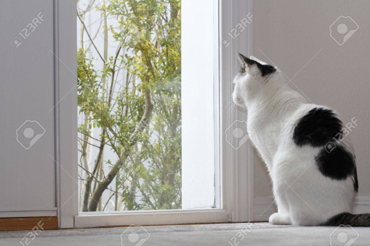 looking out front door. Kitty Cat Looking Out The Window By Front Door Of A Home While Sitting On