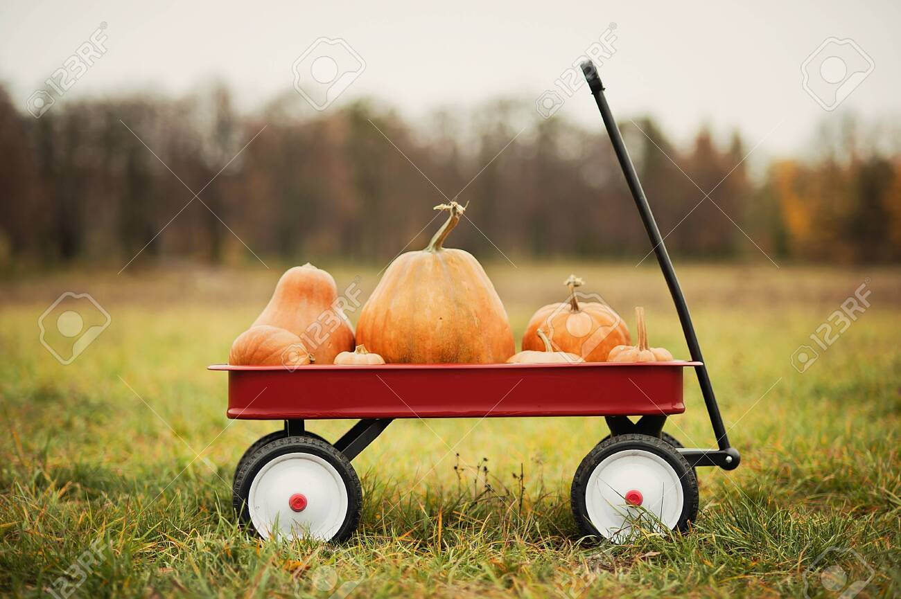 Red Wagon With A Lot Of Pumpkins For Halloween Or Thanksgiving Stock Photo Picture And Royalty Free Image Image 130931025