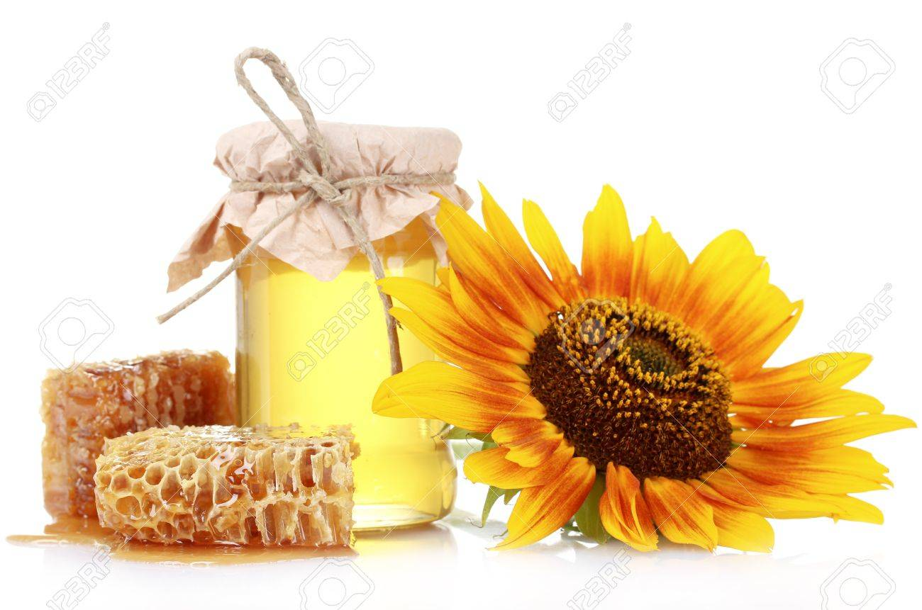 beautiful combs, honey and sunflower isolated on white Stock Photo - 10249245
