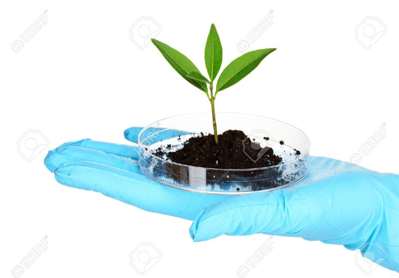 plant and hand in laboratory isolated on white Stock Photo - 10383383