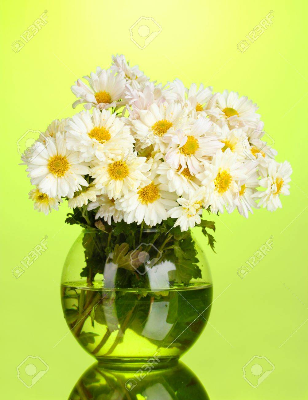 beautiful bouquet of daisies in vase on green background Stock Photo - 11068907